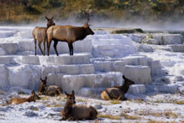 North Entrance to Yellowstone-